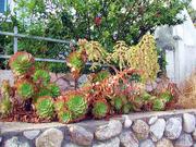 растения,  саженцы,  посадочный материал